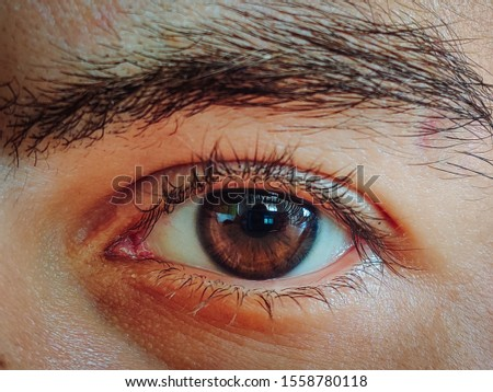 Deep brown eye with eyebrow #1558780118