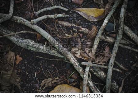 Deep brown forest ground #1146313334