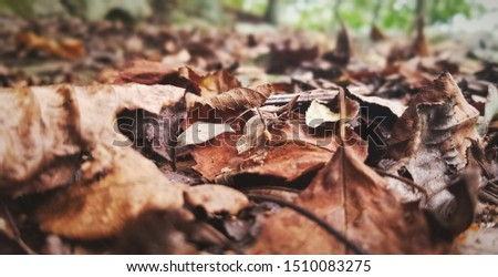 Deep brown leaves on the ground #1510083275