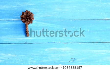 deep brown pine fruit  on light blue wooden table #1089838157