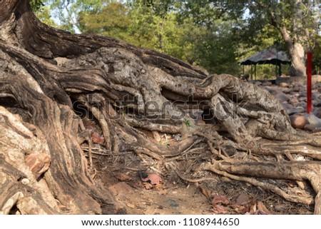 deep brown woods #1108944650