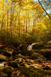 Deep Creek in he Tremont area of the Great Smoky Mountains National Park in Tennessee. Colorful autumn leaves cover many of the rocks in the creek