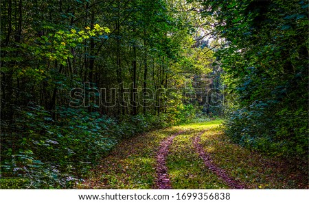 Deep dark forest road view. Forest road view. Road in forest
