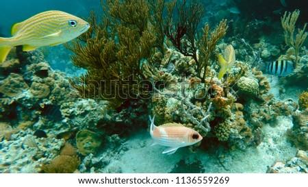 Deep Deep Under the Sea #1136559269