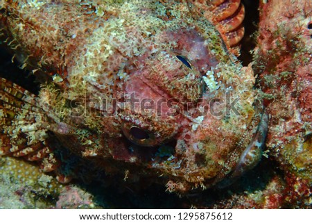 Deep fish life #1295875612
