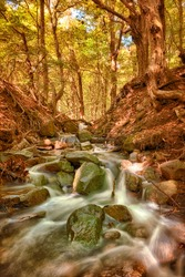 Deep forest autumn creek waterfall. Autumn nature landscape. Autumn forest creek view. Creek deep in mountain forest in Hungary Europe