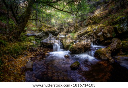 Photo of  Deep forest cold creek in autumn. Forest creek in autumn. Autumn forest creek. Forest cold creek water
