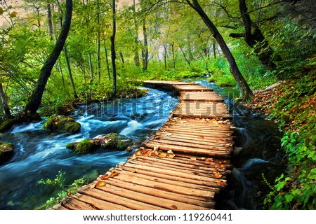Deep forest stream. Crystal clear water. Plitvice lakes, Croatia