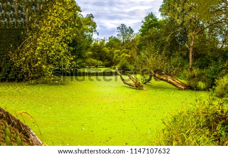 Deep forest swamp duckweed green water landscape. Forest swamp duckweed water view. Swamp forest green duckweed water scene