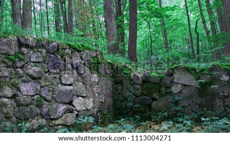 Deep in a deciduous forest, two rock walls converge to form a corner that was once the foundation of a building that is now long gone. The rocks are overgrown with moss and other vegetation. #1113004271