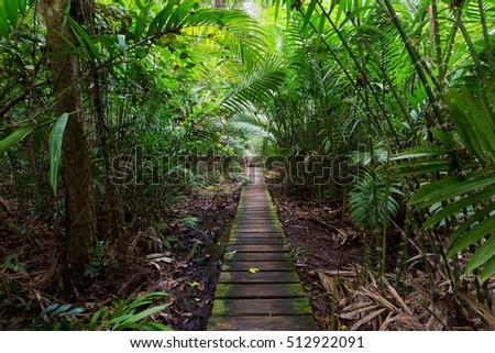 Deep jungle slutted board walkway inside palm tree forest in Bako national park, Malaysia, Borneo