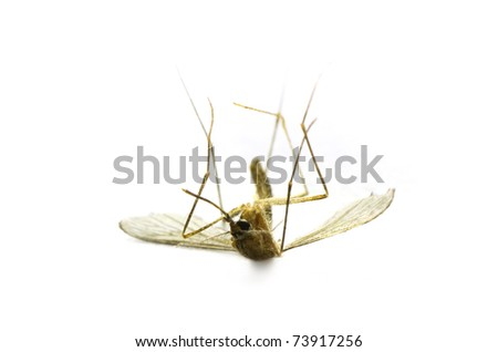 Deep macro shot of a dead mosquito over a white surface.
