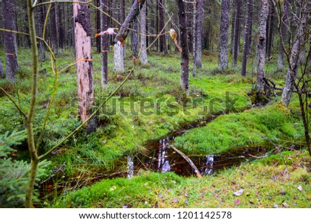 Deep mossy forest stream water landscape. Mossy forest water scene. Autumn mossy forest trees background. Autumn larch trees in mossy forest