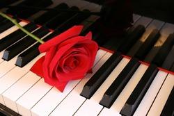 deep Red Rose on Piano keys - horizontal view