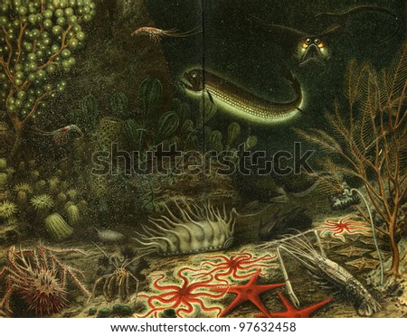 deep-sea fauna - an illustration of the encyclopedia publishers Education, St. Petersburg, Russian Empire, 1896