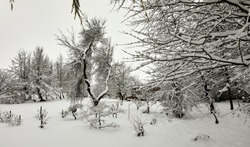 Deep snow covers the garden after daylong snowfall on moorland smallholding in Nidderdale.