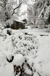 Deep snow covers the garden shed, shrubs and plants after daylong snowfall on moorland smallholding in Nidderdale.