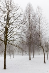 deep snow drifts after the last snowfall, winter cold weather after the snowfall, snow drifts in winter