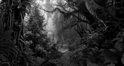 Deep tropical jungle in black and white