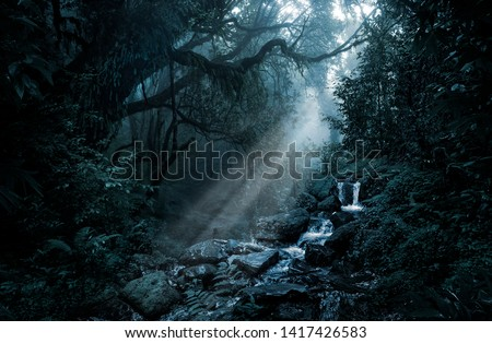 Deep tropical jungle in darkness #1417426583