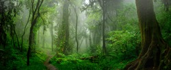 Deep tropical jungles of Southeast Asia in august