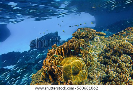 deep underwater landscape with tropical fishes and coral reef coral