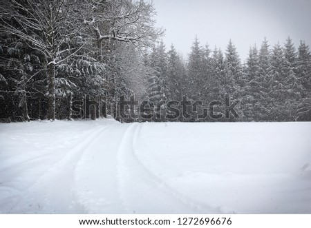 Deep Wintry forest with snowfield and rut by snowfall and sparsely colours  #1272696676