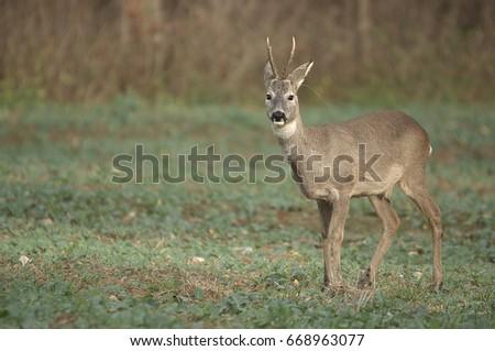 Deer #668963077
