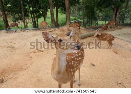 deer #741609643