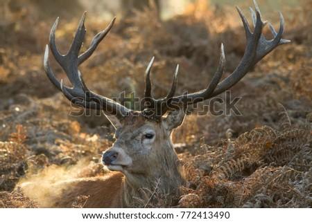 Deer #772413490