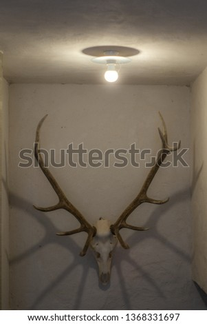 Deer antlers hanging on a wall in Switzerland #1368331697