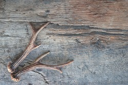 Deer antlers on old wooden background. Space for text, top view