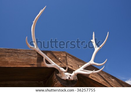 deer antlers on wooden building against blue sky