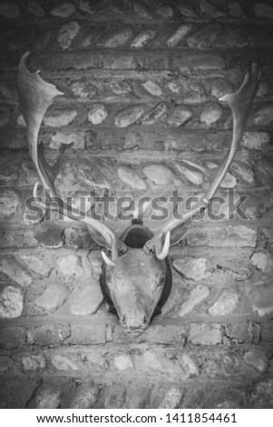 Deer antlers stage with skull #1411854461