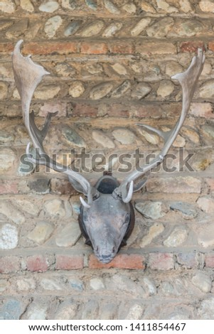 Deer antlers stage with skull #1411854467