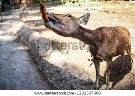 Deer at safary park #1231507300
