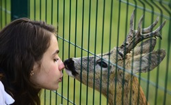 Deer bambi in the zoo cage. Deers bambi and wild animals concept. Girl feeds a deer in Park