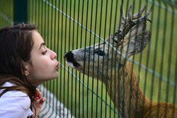 Deer bambi in zoo cage. Woman kiss white-tailed roe fawn carpeolus and wild animals concept