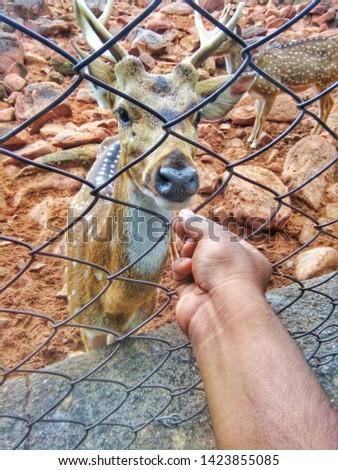 Deer eating a fruits animal lovers
