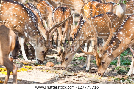 Deer family in forest