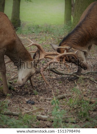 deer fight wild wild animal