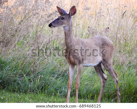 Deer, forest, field, nature, solo, limbo, standing #689468125