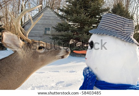 deer going after snowman's nose
