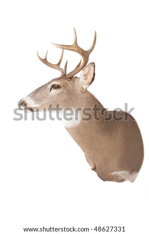 Deer head, nose pointing to the left
