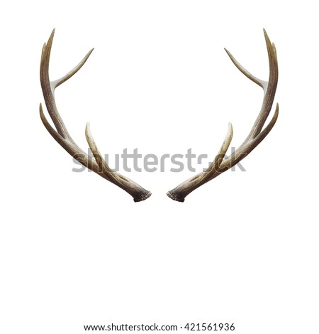 deer horns isolated on white...