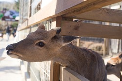 Deer in a cage at the zoo