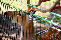 Deer in a cage at the zoo. Animal rights.