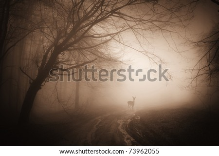 deer in a misty forest on a summer morning