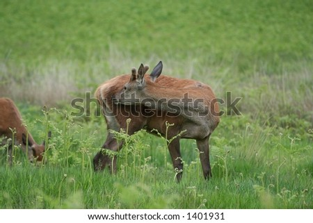 Deer in an English Country Park