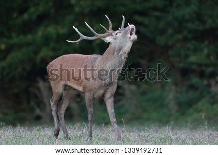 deer in Dordogne #1339492781